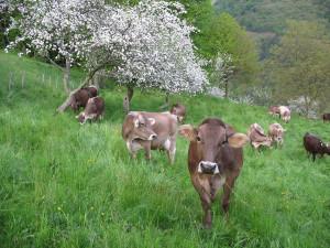 krave-creda-2