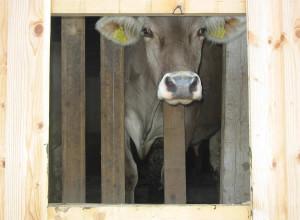 krave-creda-4